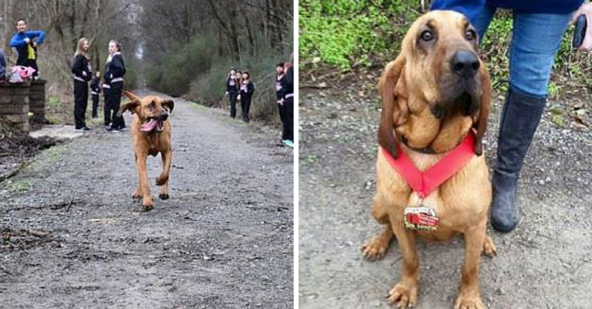 This Dog Accidentally Runs A Half Marathon And Places 7th